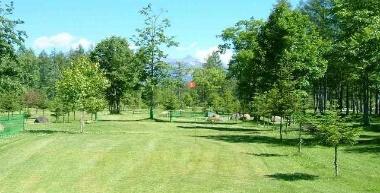 ビルケの森パークゴルフ場