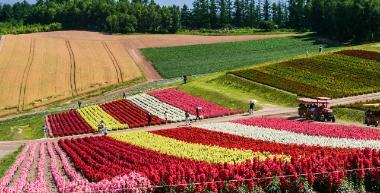 展望花畑四季彩の丘